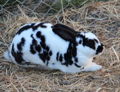 Artgerechte Haltung von Kaninchen