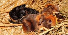 Einstreu Kleintierkäfig