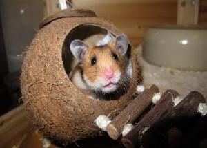 Hamster Haltung