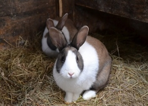 Hamster + Kaninchen