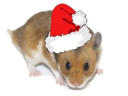 Hamster Weihnachten