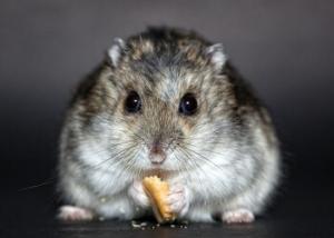 Nagerkäfig Hamster