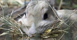 Heu für Kaninchen