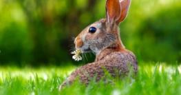 Kaninchen und Hamster
