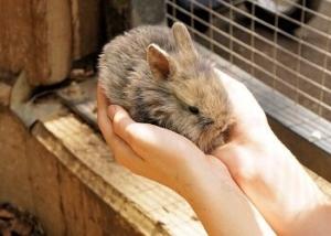 Nagerkäfig Kaninchen