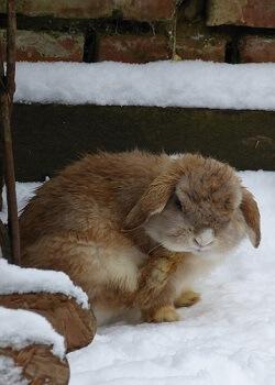 Kaninchenstall winterfest