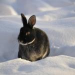 Kleintierstall winterfest machen