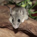 Mäusekäfig reinigen