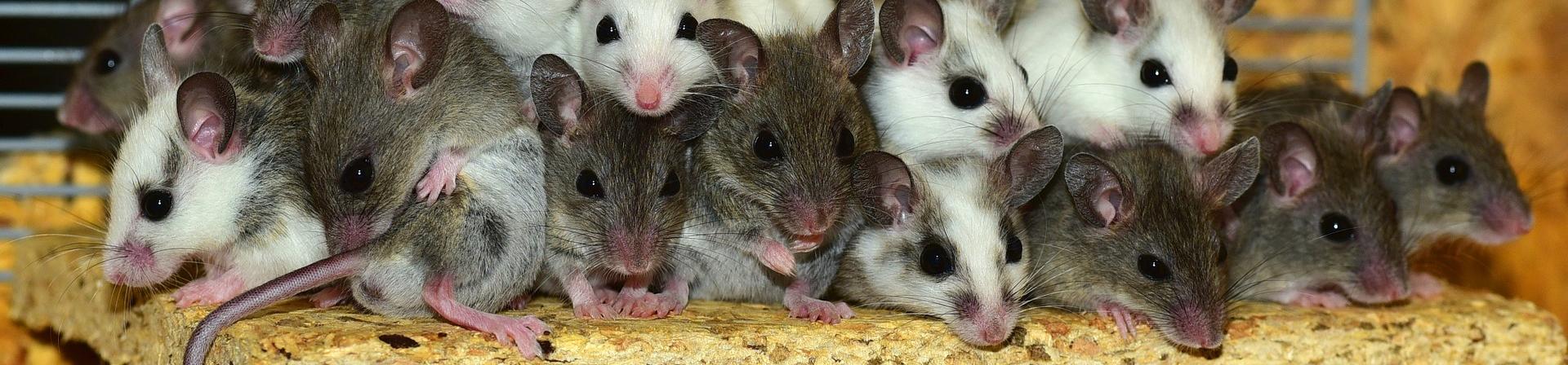 Nagerkäfig Mäuse