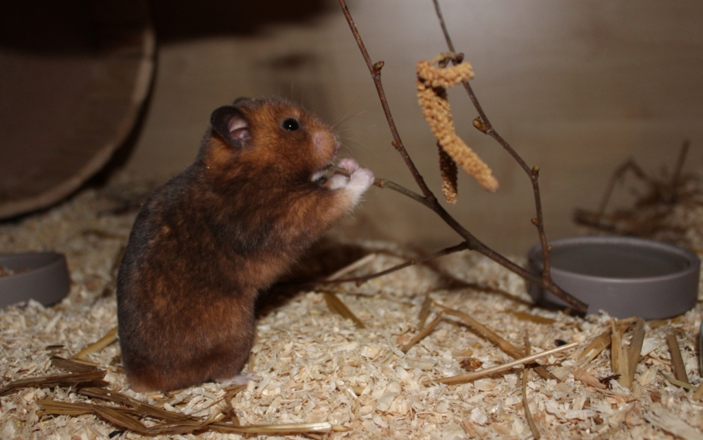 Äste und Zweige für Hamster