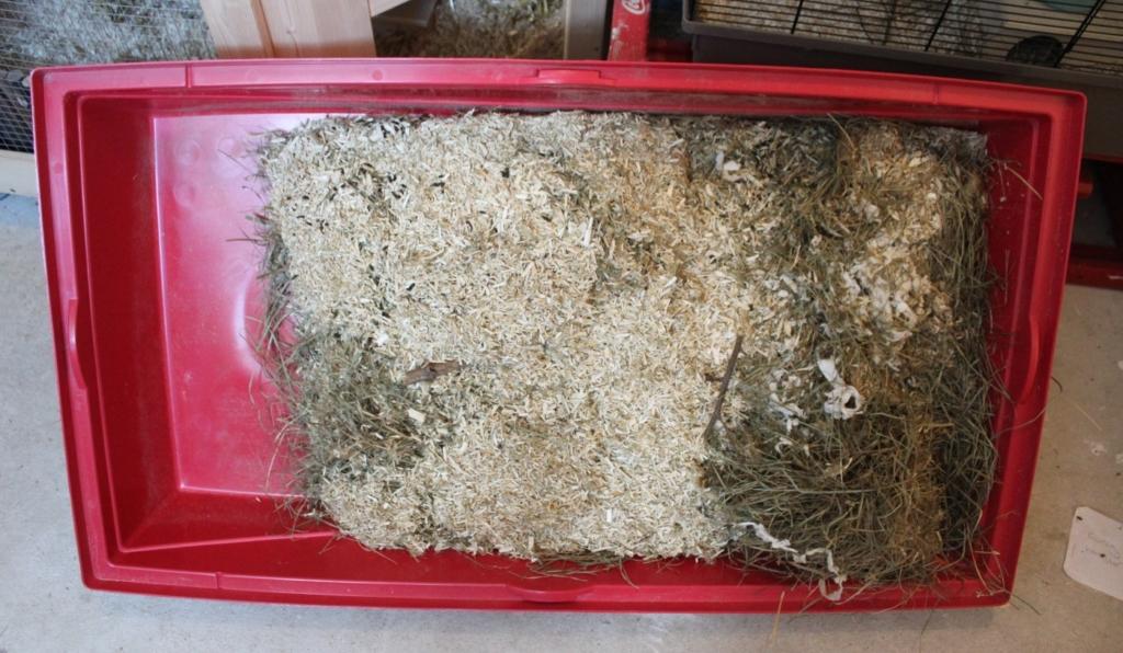 Bodenwanne des Hamsterkäfigs reinigen