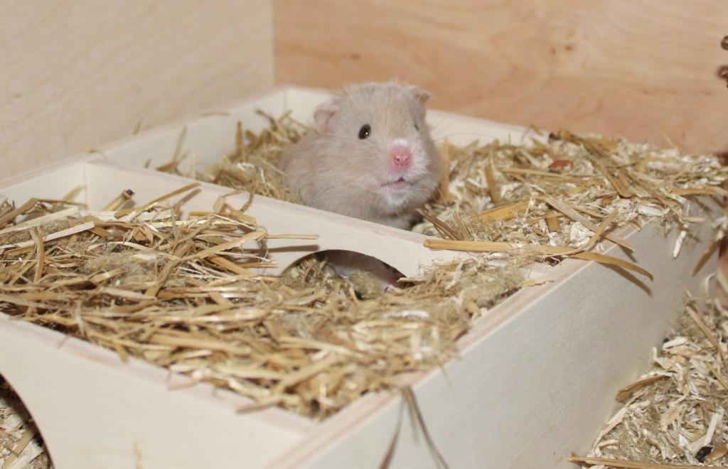 Hamster aufwecken