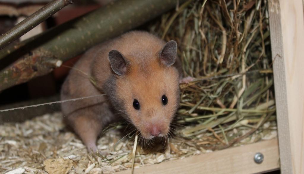 Hamster Auslauf - Raus aus dem Käfig