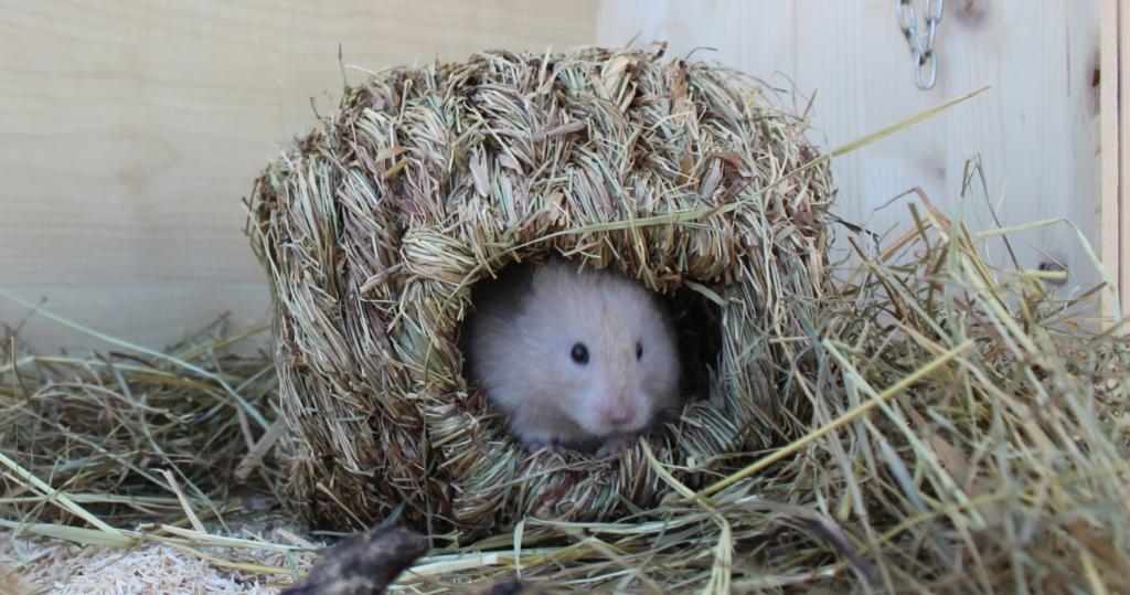 Hamster beißt meist aus Angst