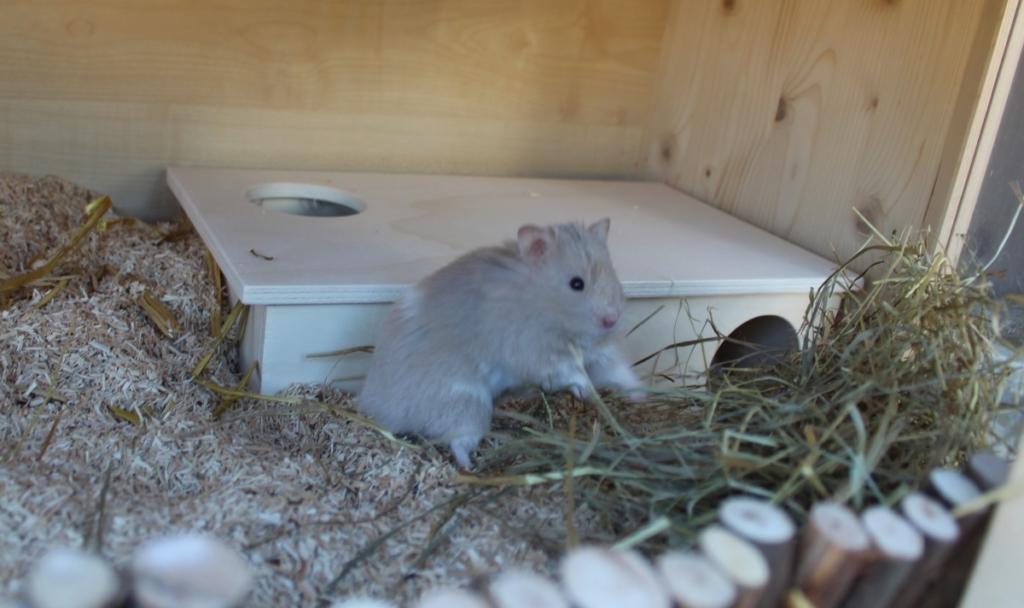 Der beschäftigte Hamster