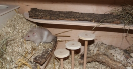 Hamster Einstreu - Welche eignet sich für den Hamsterkäfig