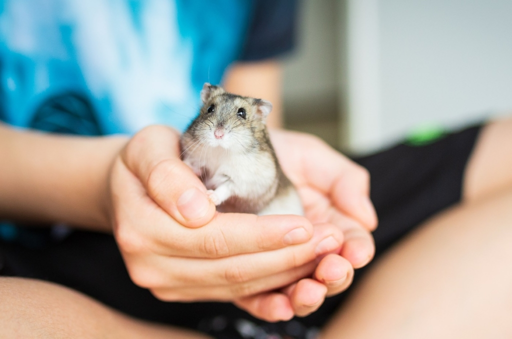 Hamster im Kinderzimmer