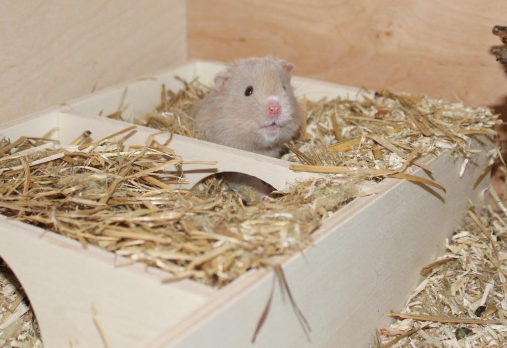 Hamster im Mehrkammernhaus