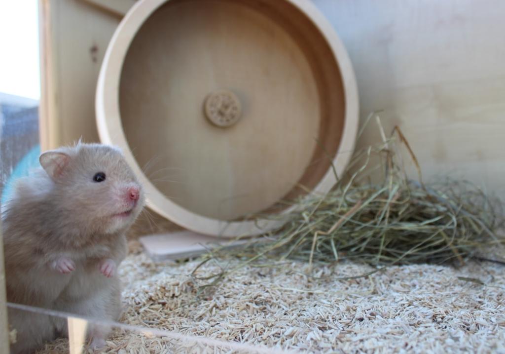 Hamster wird neugierig