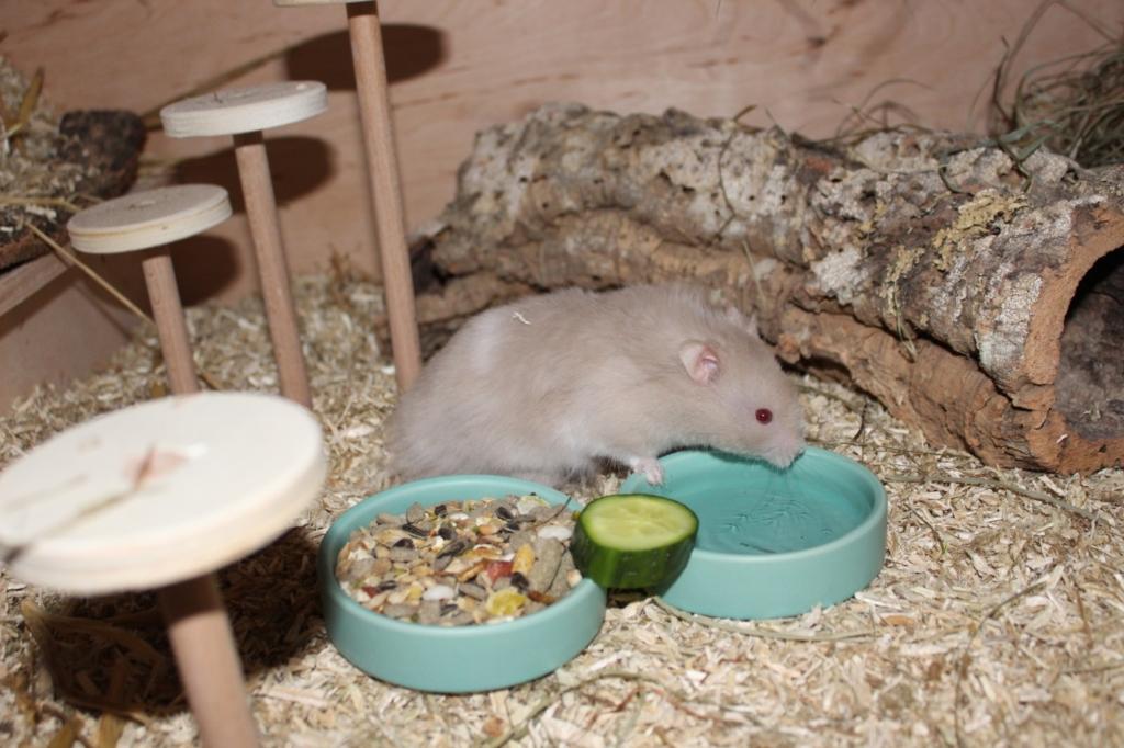Hamster ist bereits im Hamsterkäfig