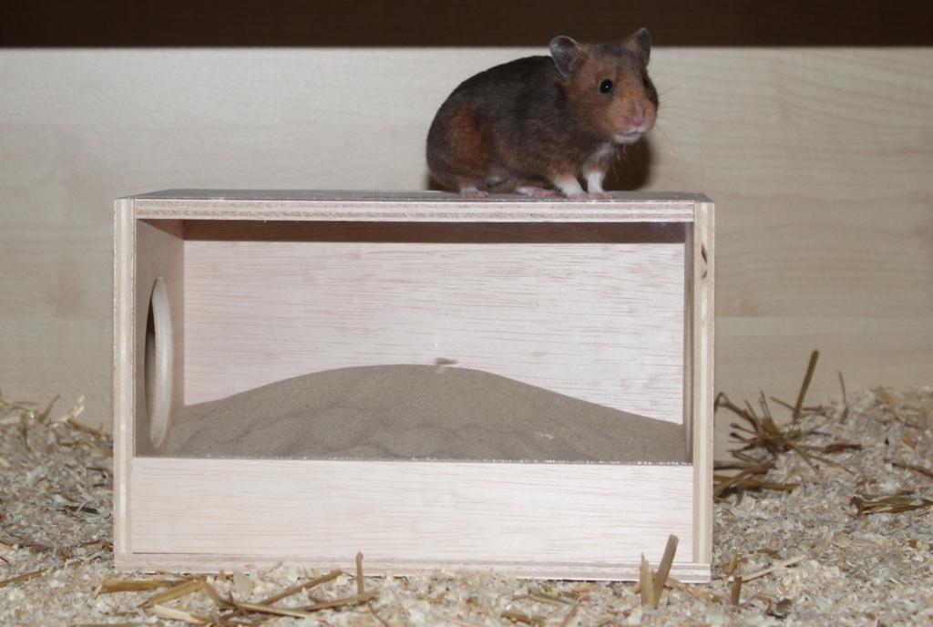 Hamster auf Badehaus