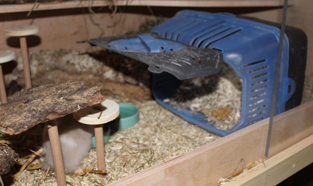 Die Hamster Transportbox - Diese Kriterien muss sie erfüllen