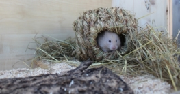 Hamster zähmen - So gehts