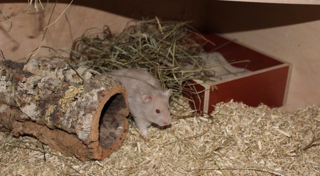 Hamsterkäfig einrichten - So gehts!