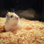 Hamsterkäfig aus Glas