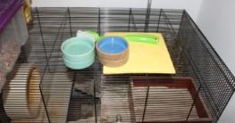 Hamsterkäfig reinigen - So macht man es sich einfach