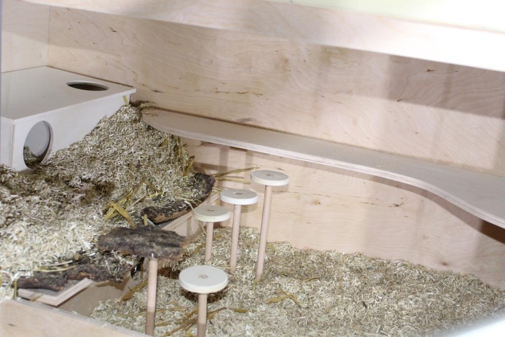 Ebenen im Teddyhamster-Käfig