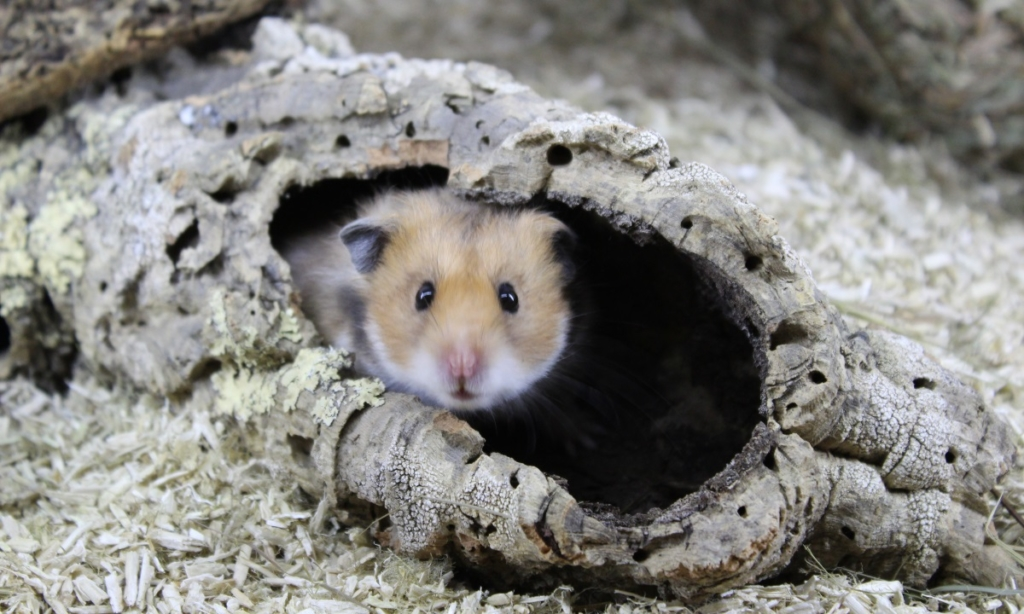 Korkröhre für Hamster