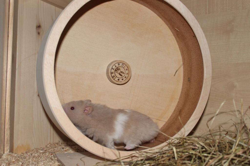 Das Laufrad für den Hamster