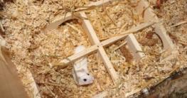 Mehrkammernhaus im Hamsterkäfig