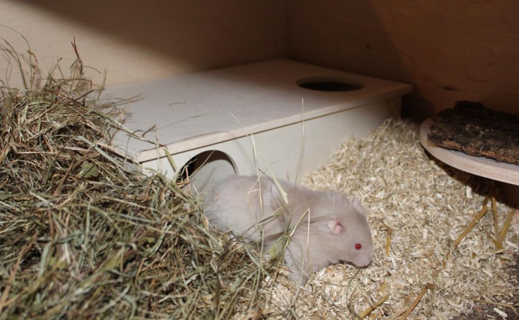 Hamster kommt aus dem Mehrkammernhaus