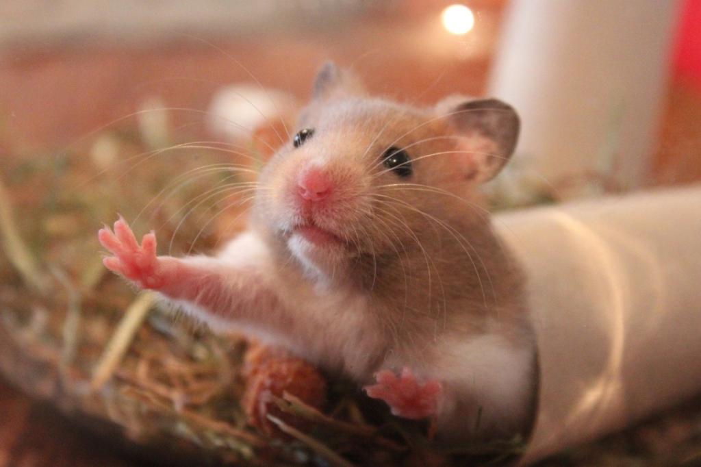Hamster im Nagarium