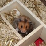 Nistmaterial Hamster