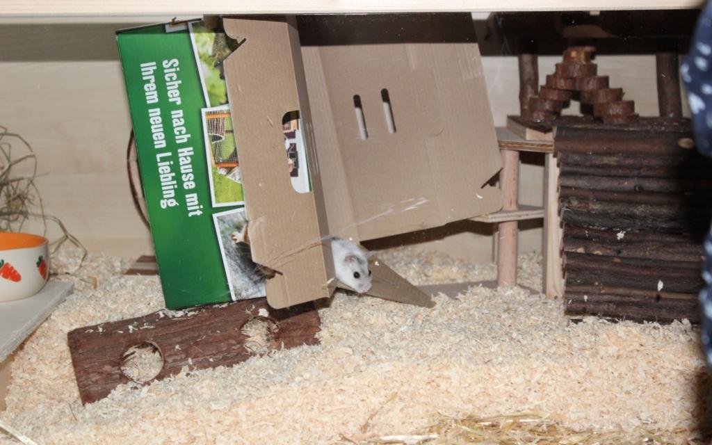 Pappkarton für den Hamster
