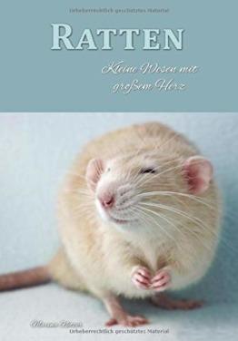 Ratten: Kleine Wesen mit großem Herz - 1