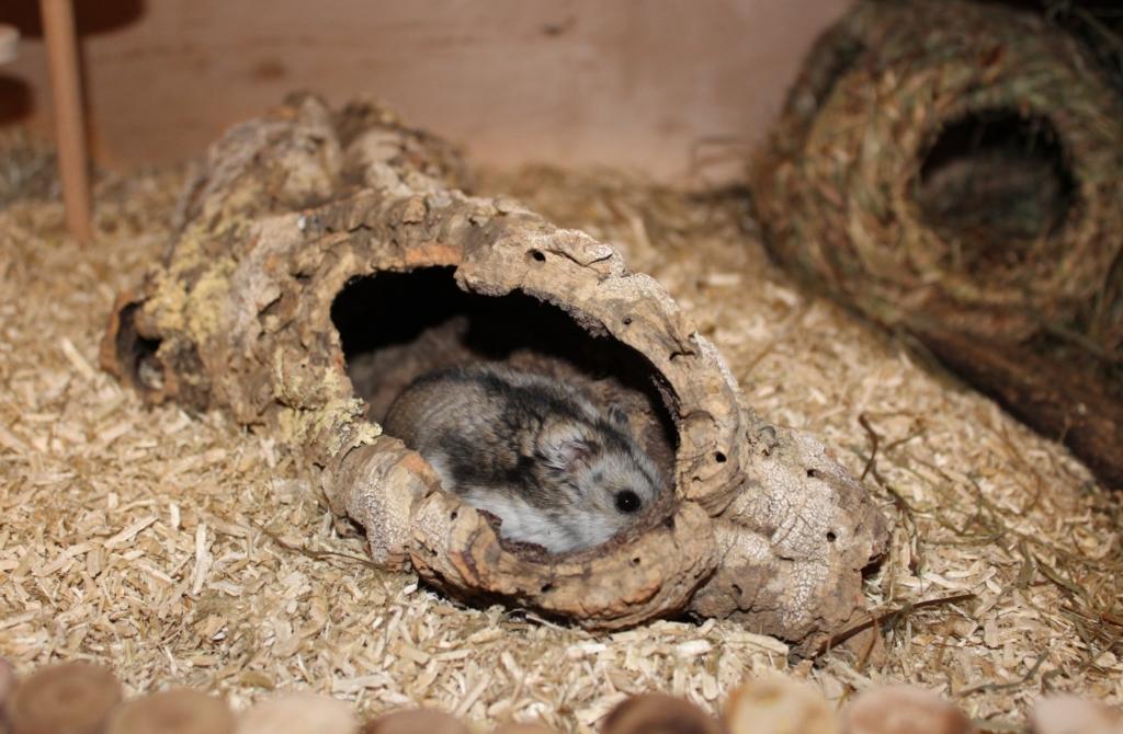 Röhren im Hamsterkäfig