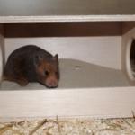 Sandbadehaus Hamster