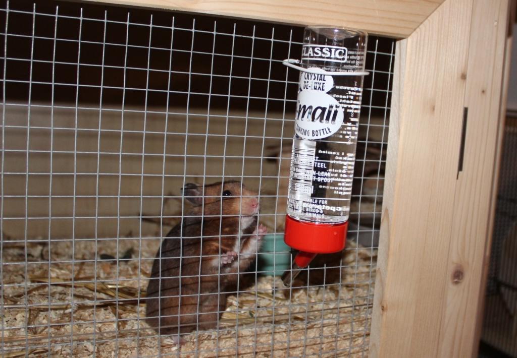 Trinkflasche als Hamstertränke