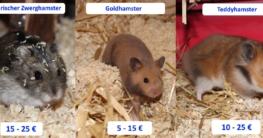 Wie viel kostet ein Hamster? Monatliche und einmalige Kosten